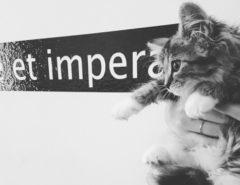 sansone gatto condivide et impera