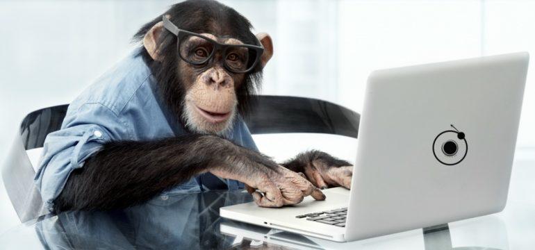 scimmi scrive blog
